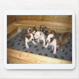 American Staffordshire Terrier Puppies Dog Mouse Pad