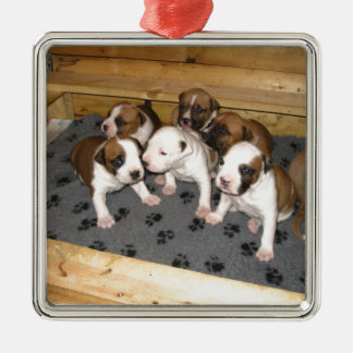 American Staffordshire Terrier Puppies Dog Silver-Colored Square Ornament