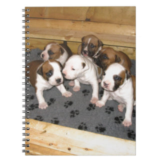 American Staffordshire Terrier Puppies Dog Spiral Note Book