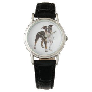 American Staffordshire Terrier Puppy Dog - Amstaff Watch