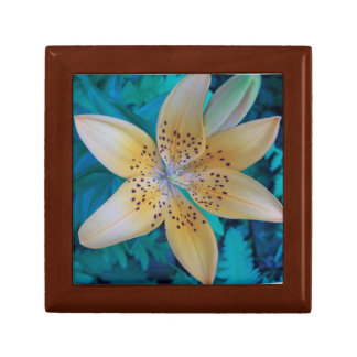 American Tiger Lily ( Gift Boxes