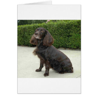 American Water Spaniel Dog Card