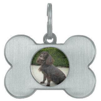 American Water Spaniel Dog Pet ID Tag