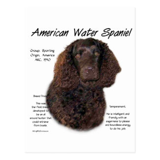 American Water Spaniel History Design Postcard