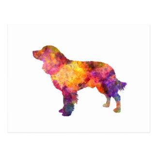 American Water Spaniel in watercolor Postcard