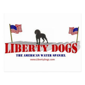 American Water Spaniel with Flags Postcard