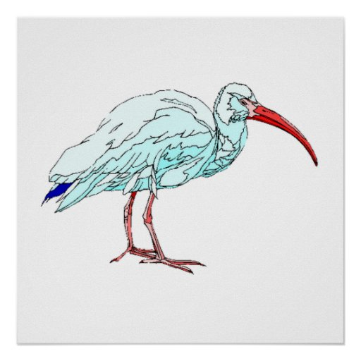 American White Ibis Print