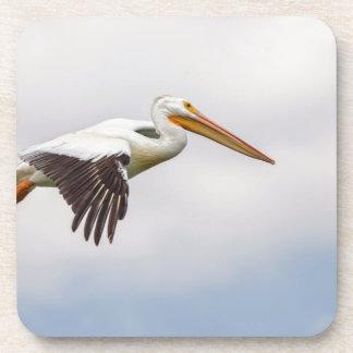 American White Pelican Cruising Coaster