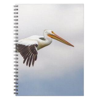 American White Pelican Cruising Notebooks