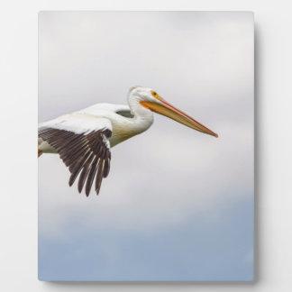American White Pelican Cruising Plaque