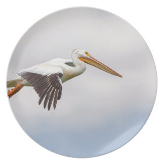 American White Pelican Cruising Plate