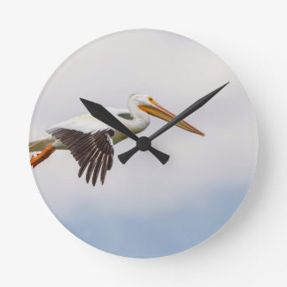 American White Pelican Cruising Round Clock