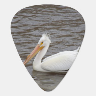 American White Pelican In Breeding Condition Pick