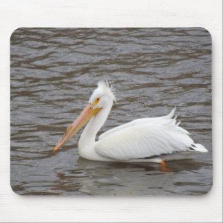 American White Pelican In Breeding Condition Mousepad