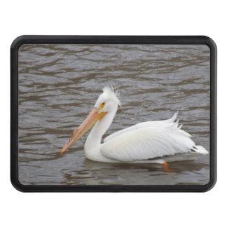 American White Pelican In Breeding Condition Hitch Cover
