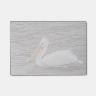 American White Pelican In Breeding Condition Post-It Note