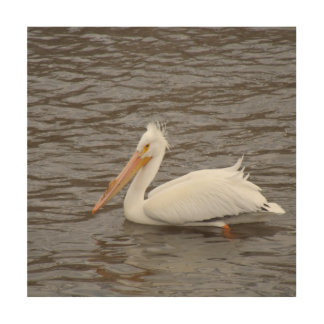 American White Pelican In Breeding Condition Wood Canvas