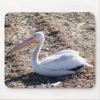 American White Pelican Mouse Pad