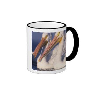 American White Pelican, Pelecanus Ringer Coffee Mug