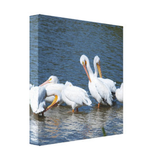 American White Pelicans Canvas Print