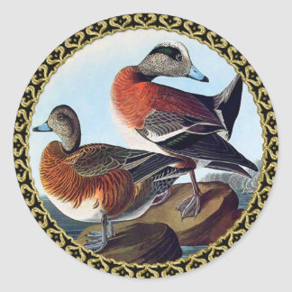 American Widgeon ducks on a rock Classic Round Sticker