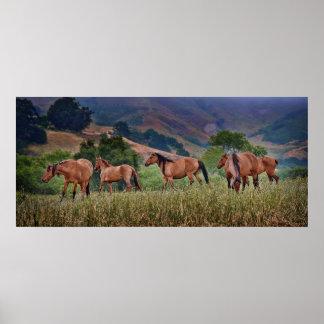 American Wild Mustang Horses Poster