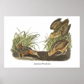 American Woodcock, John Audubon Print
