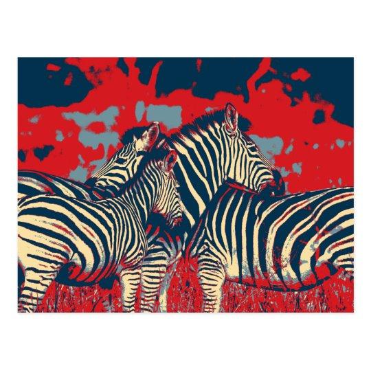 American Zebra Postcard