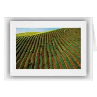Americana - Winery, Notecard