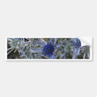 Amethyst eryngo (Eryngium amethystinum) Bumper Sticker