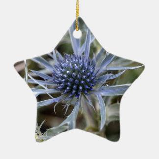 Amethyst eryngo (Eryngium amethystinum) Ceramic Star Ornament