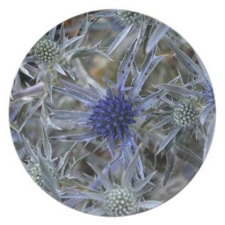 Amethyst eryngo (Eryngium amethystinum) Plate