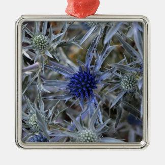 Amethyst eryngo (Eryngium amethystinum) Silver-Colored Square Ornament