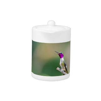 Amethyst Woodstar Hummingbird