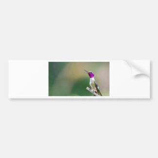 Amethyst Woodstar Hummingbird Bumper Sticker