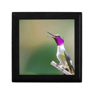 Amethyst Woodstar Hummingbird Gift Box