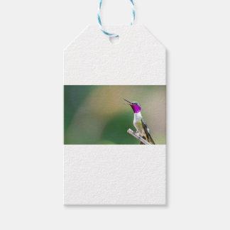 Amethyst Woodstar Hummingbird Gift Tags