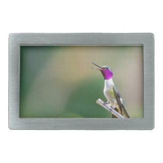Amethyst Woodstar Hummingbird Rectangular Belt Buckles