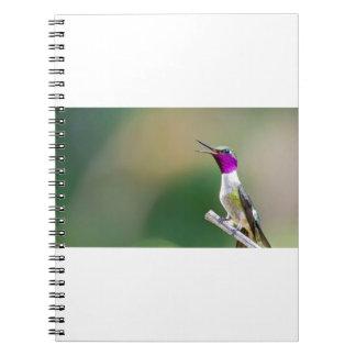 Amethyst Woodstar Hummingbird Spiral Notebook