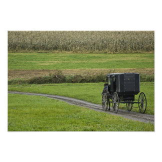 Amish buggy on farm lane, Northeastern Ohio, Poster