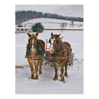 Amish Draft horses In Winter-Postcard Postcard