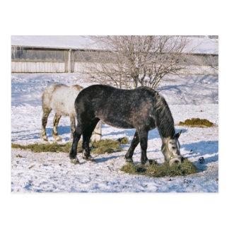 Amish Houses Feeding-Postcard Postcard