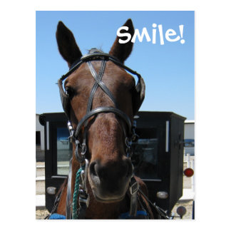 Amish Smile! Postcard