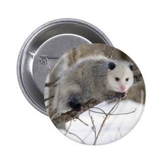 Amour d'opossum pin's avec agrafe