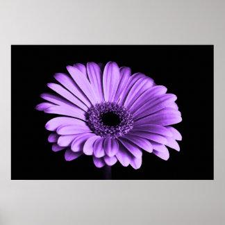 Amour lilas affiche