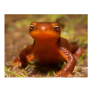 Amphibian Oregon Corvallis Reptile Postcard