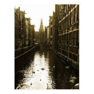 Amsterdam Canal Swans Photo Postcard