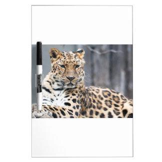 Amur Leopard Dry Erase Whiteboards
