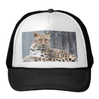Amur Leopard Trucker Hat