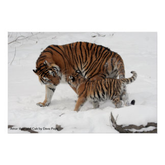Amur tiger and Cub, Amur tiger and Cub by Dave ... Poster